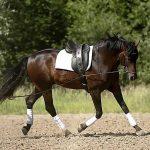 Doppellongenlehrgang mit Pferdewirtschaftsmeister Jens Lyke